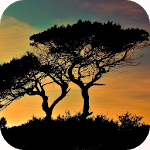 Download Nature Wallpaper APK